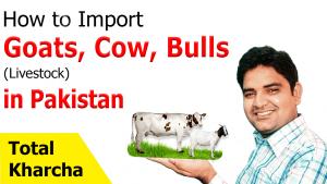 Import-Goats-Cow-Bulls-LiveStock-in-Pakistan-Total-Kharcha